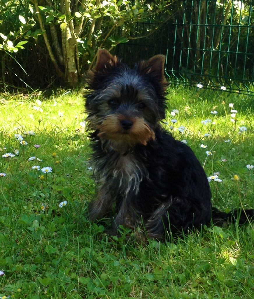 Finn 6 mois dans son jardin