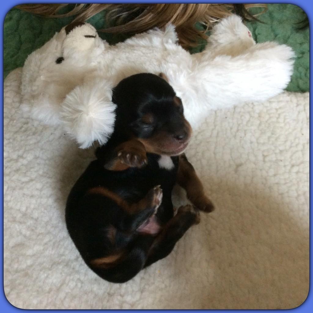 Petit Loulou a 1 semaine dort et tète!!!
