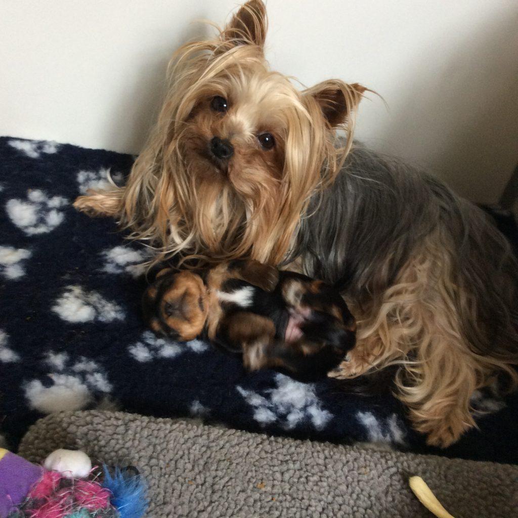 Stella et le petit 3 semaines