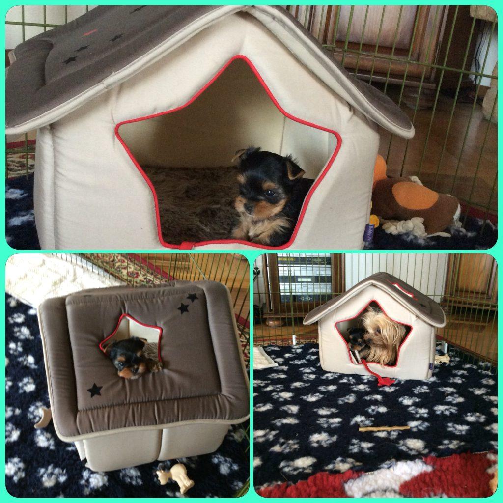 Sa petite cabane préféré
