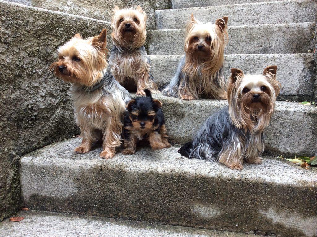 Avec toutes les chiennes de la maison,je suis bien entouré.