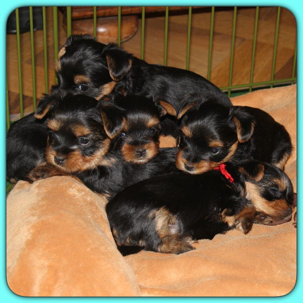 Les 5 petits à 2 mois