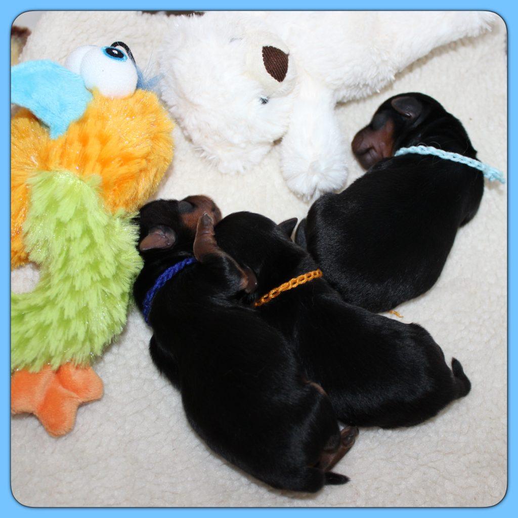 Les petits aiment dormir ensemble