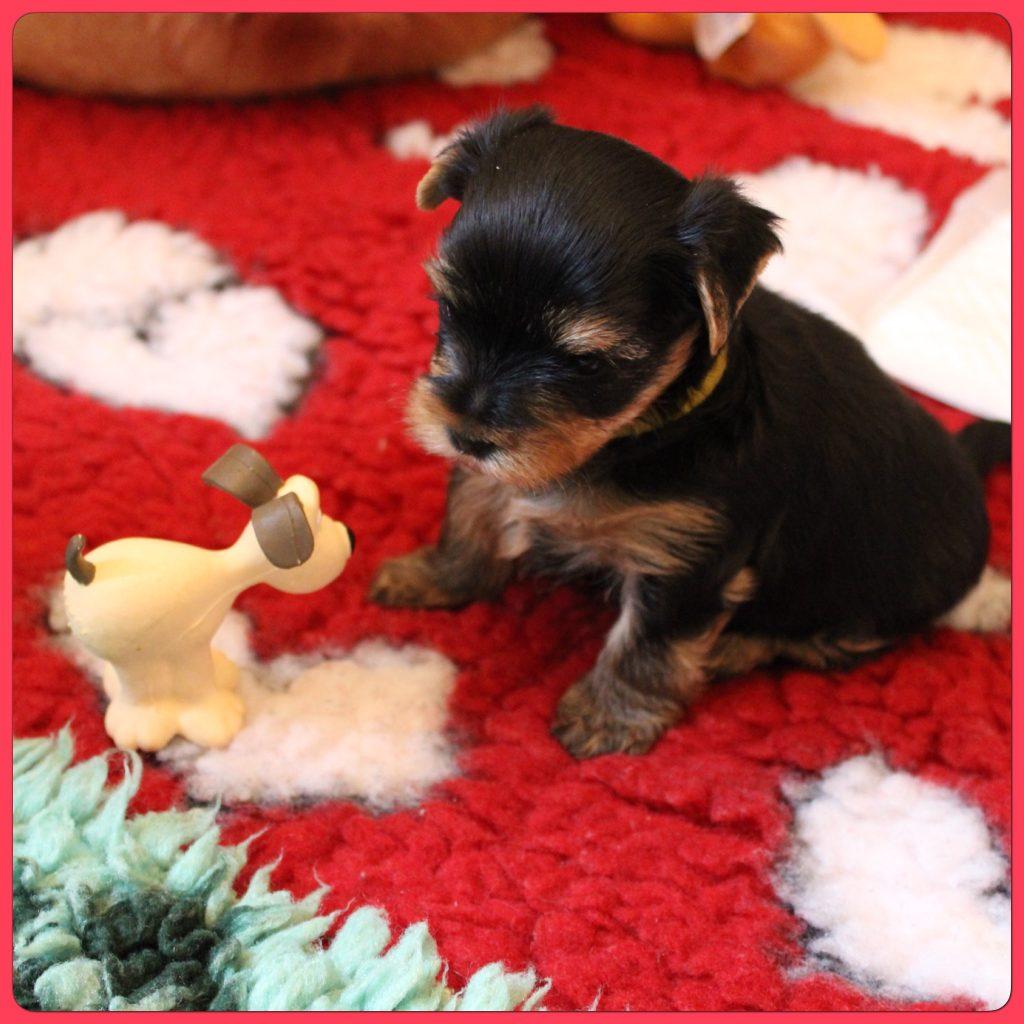 Qui est ce petit chien?bizarre il ne bouge pas se demande Abi