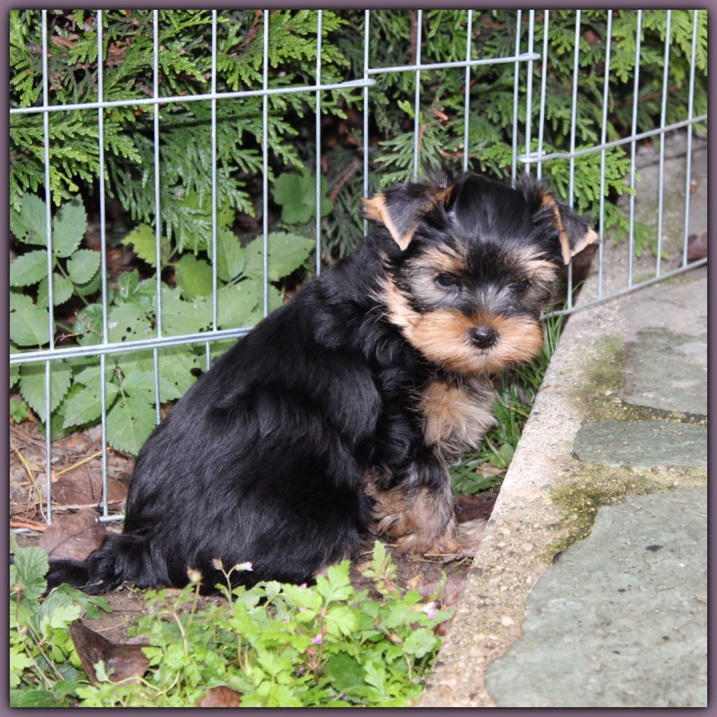 Binky adorable être au jardin