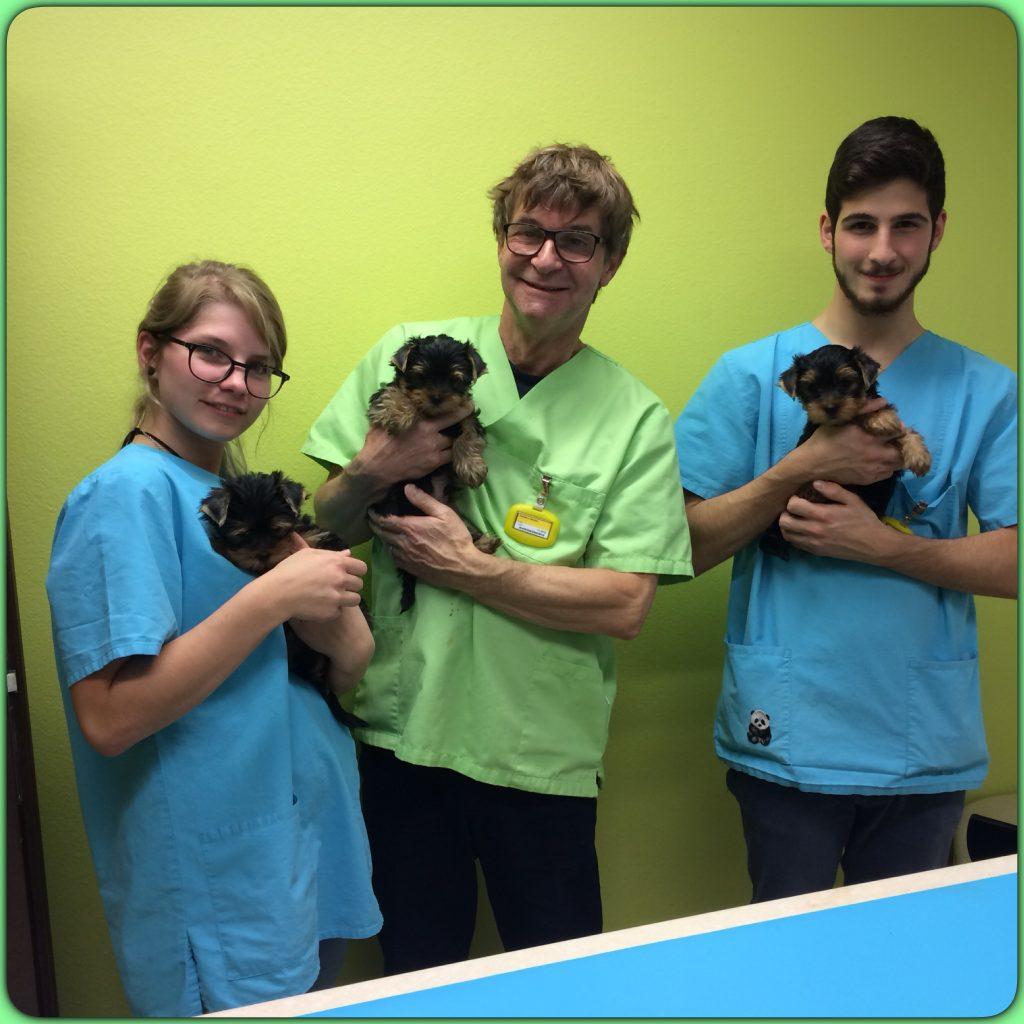 Les petits à 9 semaines pour le vaccin chez le vétérinaire