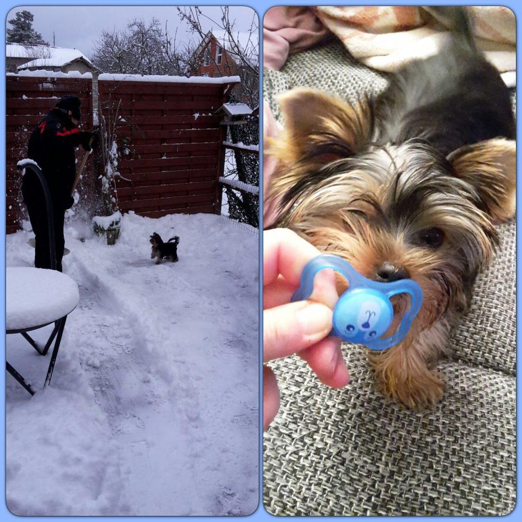 Oscar aide à déblayer la neige et après l'effort quoi De mieux qu'une lolette !!!!