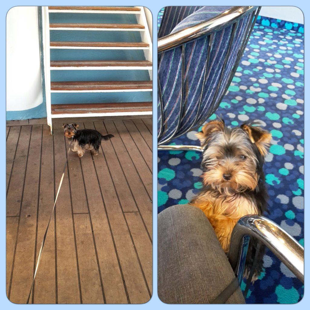 Je me balade sur le ferry